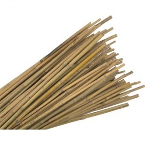 Bamboo Cane 4 ft